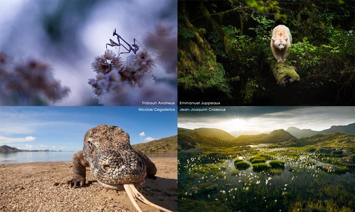 Collectif Esprit nature, festival explorimages